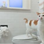 簡単風水「トイレ風水 1分で金運アップする方法」