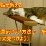 面白猫が教える簡単運気アップ方法「やる気がでないのはこのせい?」邪気編