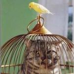 簡単金運アップ術「鳥かご」インテリアで金運引きよせる方法