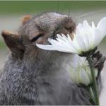 簡単風水「いい香り」で金運アップ  面白動物が案内するよ♪