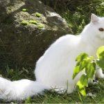 幸せの前兆 この猫見たら超ハッピー♪ 幸せ猫を見つけよう!